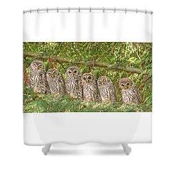 Barred Owlets Nursery Shower Curtain
