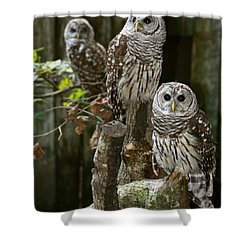 Shower Curtain featuring the photograph Barred Owls On Watch by Myrna Bradshaw