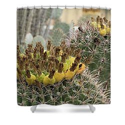Barrel Cactus Closeup Shower Curtain by Anne Rodkin
