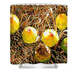 Shower Curtain featuring the photograph Barrel Cactus Fruit by Merton Allen