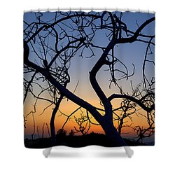Shower Curtain featuring the photograph Barren Tree At Sunset by Lori Seaman