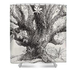Barringtonia Tree Shower Curtain