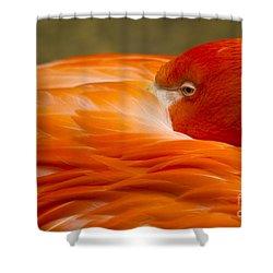 Bashful Flamingo Shower Curtain