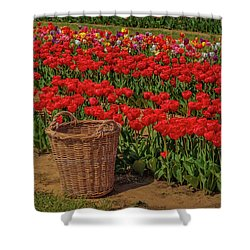 Shower Curtain featuring the photograph Basket For Tulips by Susan Candelario