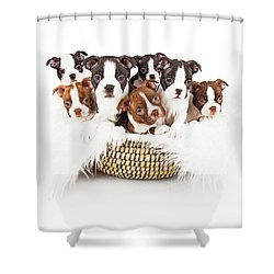 Basket Of Boston Terrier Puppies Shower Curtain