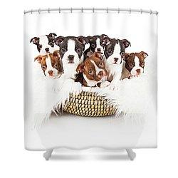 Basket Of Boston Terrier Puppies Shower Curtain