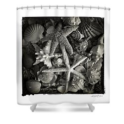 Shower Curtain featuring the photograph Basket Of Shells by Linda Olsen
