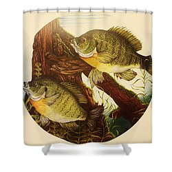 Basking Bluegills Shower Curtain