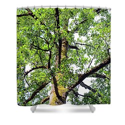 Shower Curtain featuring the photograph Basking In The Light Of The Lord by Tikvah's Hope