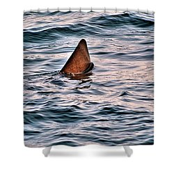 Basking Shark In July Shower Curtain