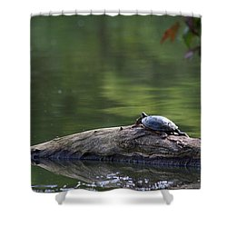 Shower Curtain featuring the photograph Basking Turtle by Lyle Hatch
