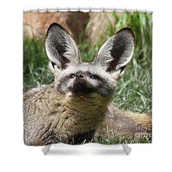 Bat-eared Fox Shower Curtain