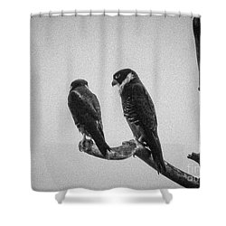 Bat Falcon In Black And White Shower Curtain