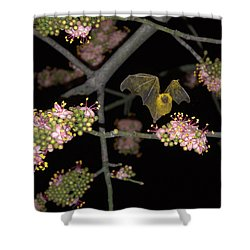 Shower Curtain featuring the photograph Bat by Jim Walls PhotoArtist