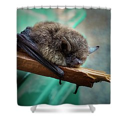 Shower Curtain featuring the photograph Bat Rehoused by Jean Noren
