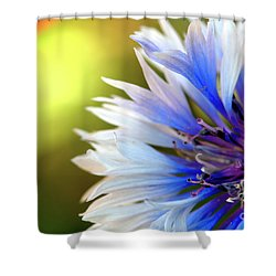 Batchelors Blue And White Button Shower Curtain