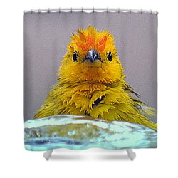 Shower Curtain featuring the photograph Bath Time Finch by Lori Seaman