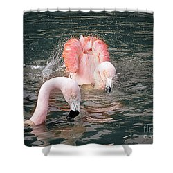 Bath Time For The Flamingos Shower Curtain by Melissa Messick