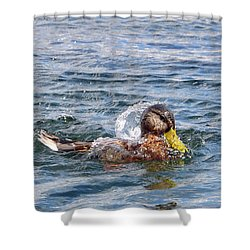 Shower Curtain featuring the photograph Bath Time by Glenn Gordon