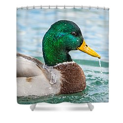 Shower Curtain featuring the photograph Bath Time by Steven Santamour