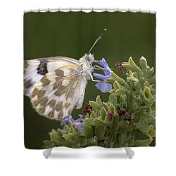 Bath White Shower Curtain