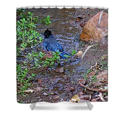 Bathing Stellers Jay Shower Curtain