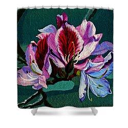 Bauhinia Beauty Shower Curtain by Susan Duda