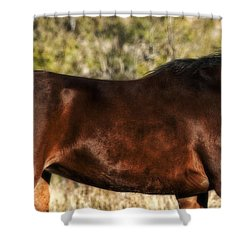Shower Curtain featuring the photograph Bay Arabian Mare by Karen Slagle