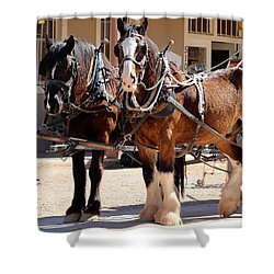 Bay Colored Clydesdale Horses Shower Curtain