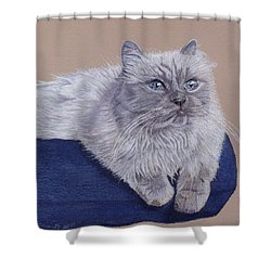 Bayou - Portrait Of A Himalayan Shower Curtain by Patricia Barmatz