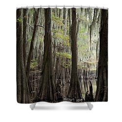 Bayou Trees Shower Curtain