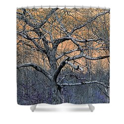Bb's Tree 2 Shower Curtain