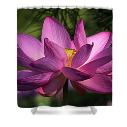 Shower Curtain featuring the photograph Be Like The Lotus by Cindy Lark Hartman