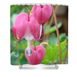 Shower Curtain featuring the photograph Be Still My Little Bleeding Heart by Margaret Bobb