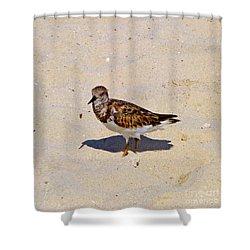 Shower Curtain featuring the photograph Beach Bird by Francesca Mackenney