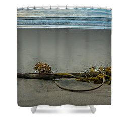 Beach Bull Kelp Laying Solo Shower Curtain