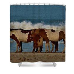 Beach Bum Ponies Shower Curtain by William Bartholomew
