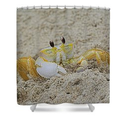 Beach Crab In Sand Shower Curtain
