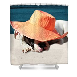 Shower Curtain featuring the photograph Beach Day For Bubba by Shelley Neff