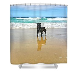 Shower Curtain featuring the photograph Beach Dog And Reflection By Kaye Menner by Kaye Menner