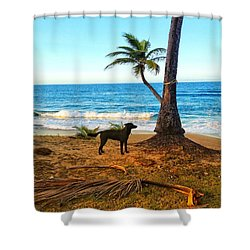 Beach Dog  Shower Curtain