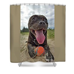 Shower Curtain featuring the photograph Beach Dog - More Play? By Kaye Menner by Kaye Menner