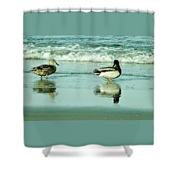 Beach Ducks Shower Curtain by John Wartman