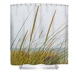 Shower Curtain featuring the photograph Beach Grass by Kendall McKernon