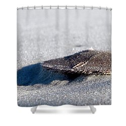 Beach Money Shower Curtain by Sean Allen