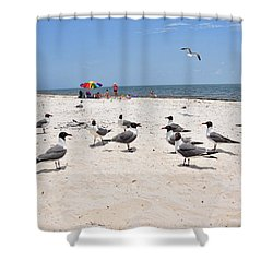 Shower Curtain featuring the photograph Beach Party by Jan Amiss Photography