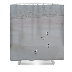 Beach Seagulls Shower Curtain
