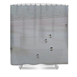 Beach Seagulls Shower Curtain