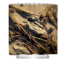 Beach Still Life Shower Curtain by Susanne Van Hulst
