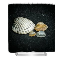 Beach Treasures  Shower Curtain by Karen Stahlros
